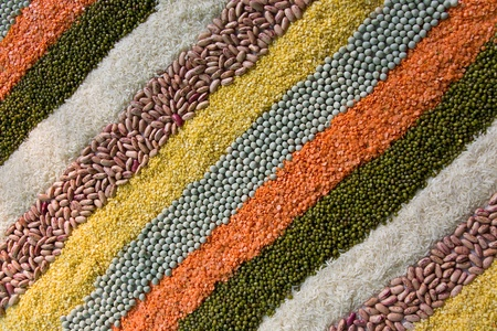 colorful striped rows of dry beans, legumes, peas, lentils  photo