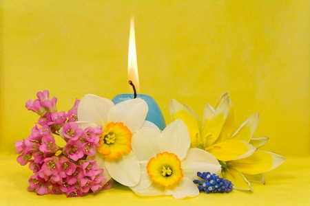blue easter cande with   narcissus, bergenia and tulips on yellow background photo