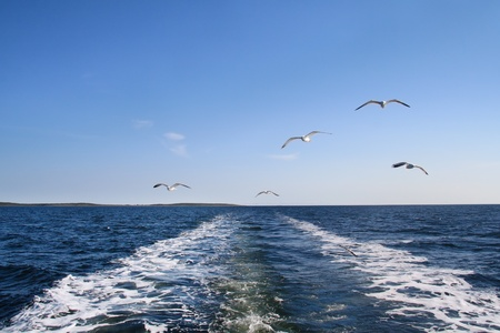 A seagulls soaring in the blue sky