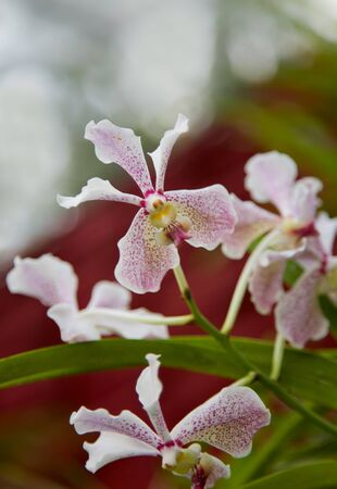 beautiful rare: Beautiful Rare Violet Orchid against black  background