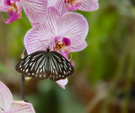 beautiful rare: Beautiful Rare Violet Orchid  - phalaenopsis with butterfly Stock Photo