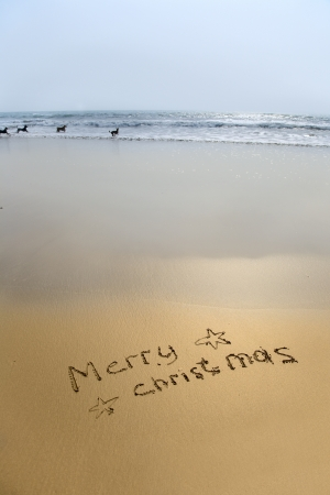 merry christmas written in sand on beach with dogs in sea photo