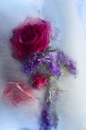 Flowers frozen in ice, art winter background. Stock Photo - 24095123