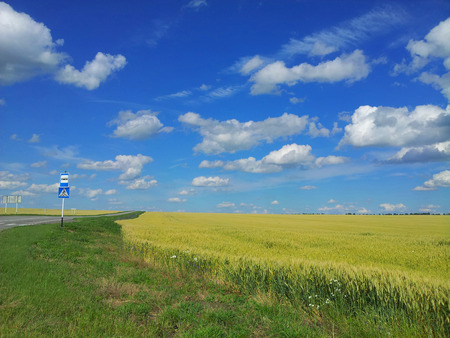 Meadow of wheat. Beautiful landscape.  bus stop sign at roadside,Belgorod Oblast. Russia.  photo