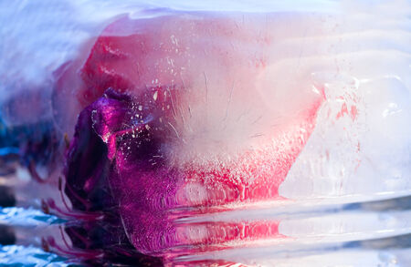 Frozen  fresh beautiful   flower of     fuchsia   and air bubbles in the ice  cube photo