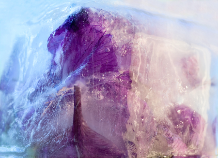 Frozen  fresh beautiful   flower of     iris  and air bubbles in the ice  cube photo