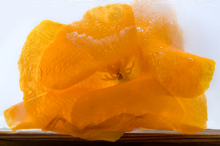 Frozen  fresh beautiful   flower of   poppy  and air bubbles in the ice  cube photo