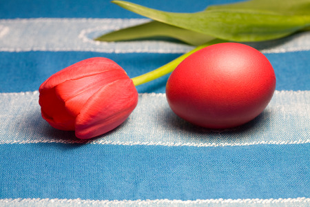 ovoid: Colorful painted Easter egg and tulip against  background