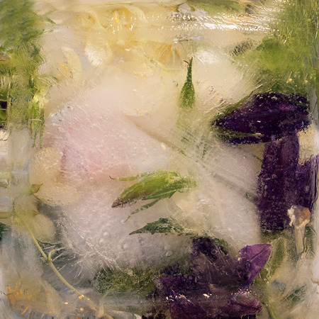 jessamine: Frozen  fresh beautiful   flower of  jessamine, campanula  and air bubbles in the ice  cube