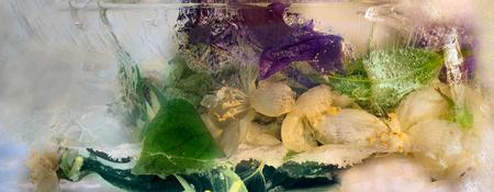 jessamine: Congelato bel fiore fresco di Jessamine, clematis e bolle d'aria nel cubo di ghiaccio