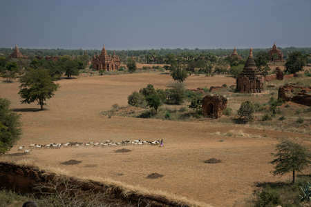 ligh: view of the Plain of Bagan  at day ligh,  Myanmar