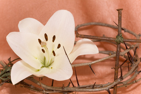 eastertime: Crown of Thorns, crucifix and Easter white Lily