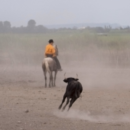 blur image of Cowboy separates the Camargue bull from the herd during a show for tourists in Parc Regional de Camargue - Provence, France Banco de Imagens