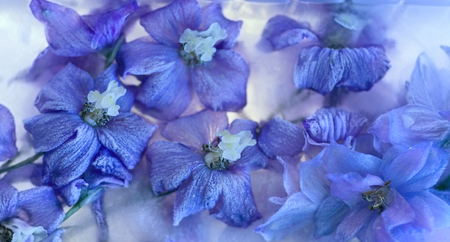 Flowers of   delphinium frozen in ice, art winter background. Imagens