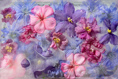 Background of violet, balsamine, geranium, chicory (succory) flower in ice cube with air bubbles Reklamní fotografie