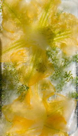 Background of pumpkin,   marrow, zucchini,  flower  in ice   cube with air bubbles