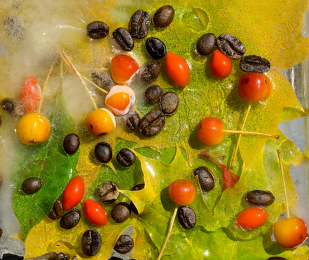 Background of    black coffee beans, red small apple, berry of goji and yellow leaves of maple in ice   cube with air bubbles