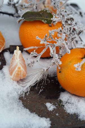 Clementines tangerines in metal basket  as Christmas decor over snow background with frost.  New Year cards and decorations.