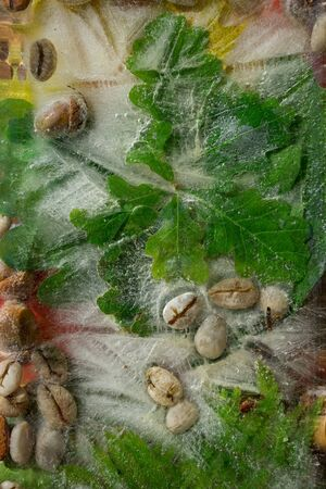 Background of  green leaves of oak and green coffee beans  and acorn   in ice   cube with air bubbles. Flat lay consept for summer  coffee Banque d'images - 138373006