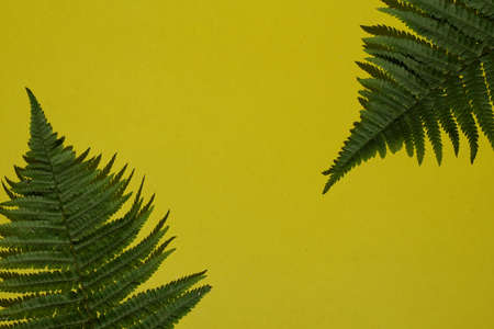 Creative top view fern leaves with shadow on yellow paper background with copy space in minimal style, template for lettering, text or your design