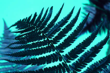 Creative top view fern leaves with shadow on paper background with copy space in minimal style, template for lettering, text or your design, classic blue toned Zdjęcie Seryjne