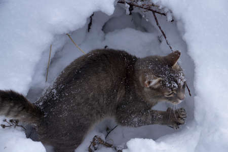 Gray cat on white snow background. Christmas and New year decorations or greeting card. Stock Photo