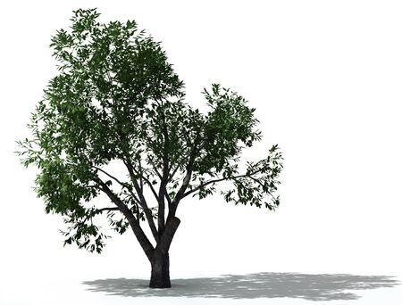 elm: elm tree