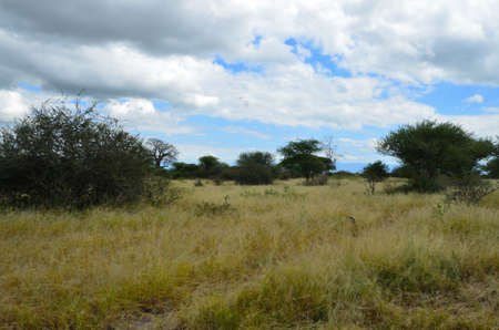 savanna: African savanna landscape Stock Photo