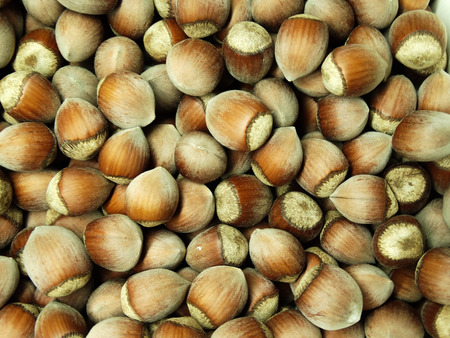 Background of a lot of hazelnuts. A photo