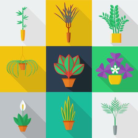 Illustratie van kamerplanten, indoor en kantoor planten in pot. Vlakke stijl vector icon set