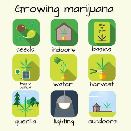 weeds: Marijuana growing icon set. Vector illustration in flat style.