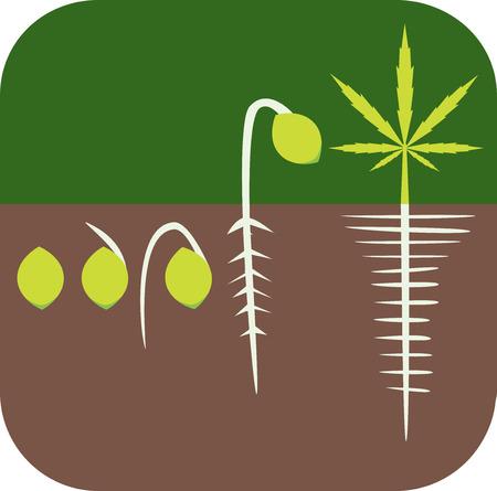 germination: Marijuana growing concept. Germination icon.  Illustration