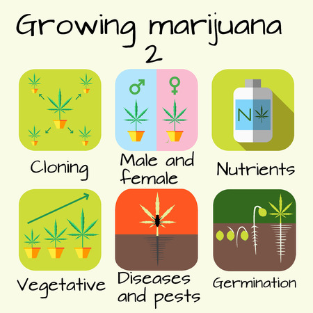 cannabis sativa: Marijuana growing concept. Icon set. Cloning, vegetative, diseases and pests, gemination, nutrients, male female plants.  Illustration