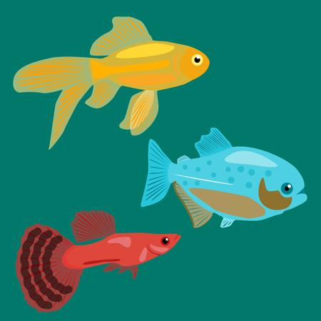guppy fish: Aquarium fish. Goldfish, Piranha, Guppy. Illustration
