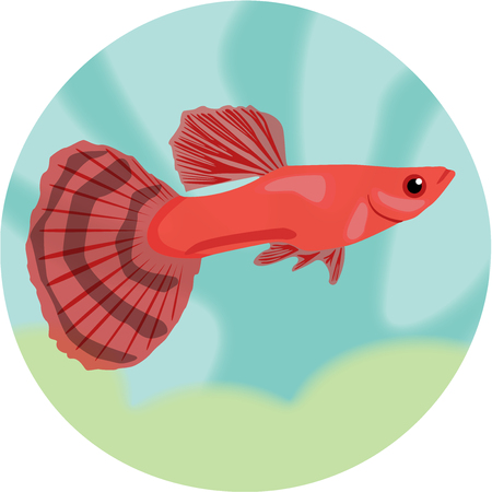 danio rerio: Aquarium fish. Guppy. Illustration
