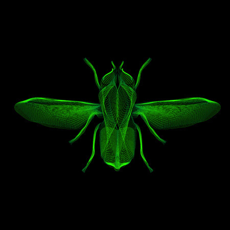 musca: Green fly. 3d hologram style vector illustration for prints, bag, tatto or t-shirt.