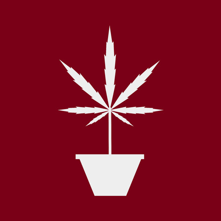 marijuana plant: Silhouette of marijuana plant in pot on cranberry background