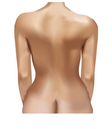 donna nuda: Indietro di una giovane donna nuda isolato su sfondo bianco. Vettoriali