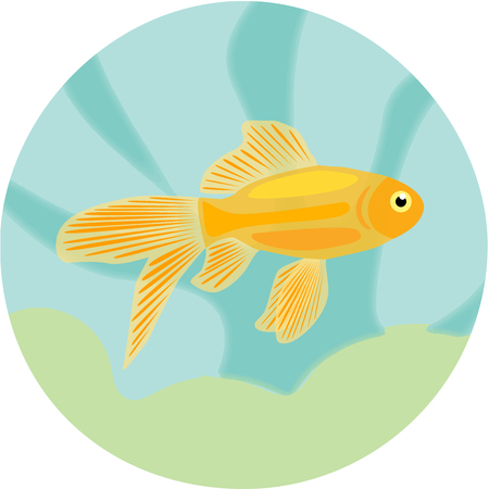 zebrafish: Aquarium fishes