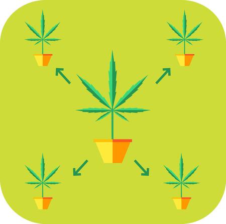 Cultivo de marihuana concepto. icono de la clonación. ilustración vectorial de diseño de estilo plano.
