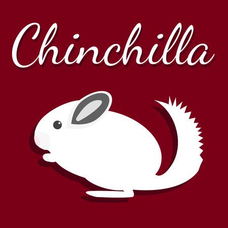 chinchilla: Chinchilla. Vector illustration. Pet icon in flat style design. Illustration