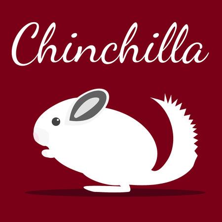 lanigera: Chinchilla. Vector illustration. Pet icon in flat style design. Illustration