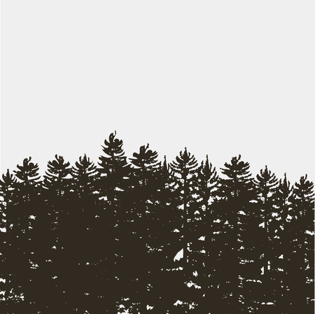 coniferous forest: Black pine tree forest isolated on white grey background. Vintage coniferous forest design template. Wilderness, tourism, journey  concept.   Vectores