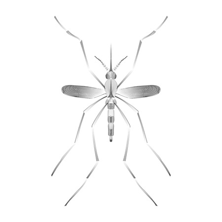 dengue fever: Fever mosquito species aedes aegyti isolated on white background. Malaria, Zika virus disease, dengue concept. Line vector illustration for informational and institutional sanitation and related care.