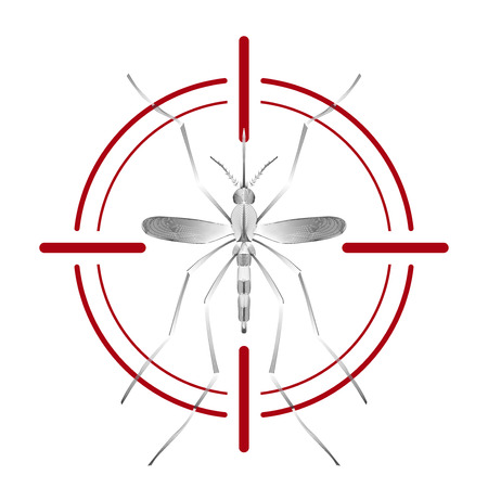 sanitation: Fever mosquito species aedes aegyti  in aim on white background. Malaria, Zika virus disease, dengue concept. Line vector illustration for informational and institutional sanitation and related care.