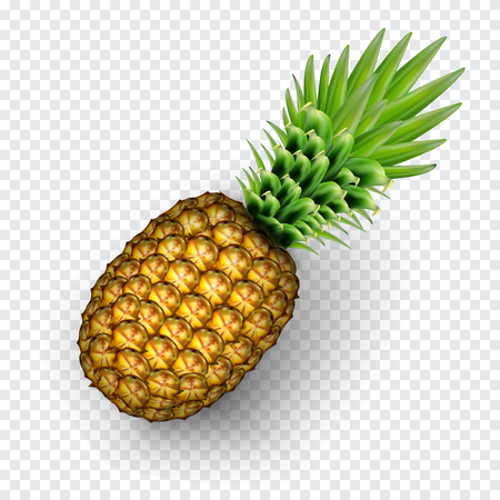 Pinaapple realistic image with transparent shadow vector illustration isolated on plaid white background Ilustrace