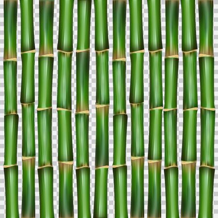Bamboo grass oriental wallpaper vector illustration. 向量圖像