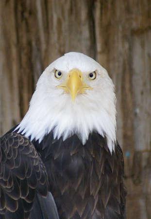 Grounded for Life. Eagle werd neergeschoten en zal nooit weer vliegen.