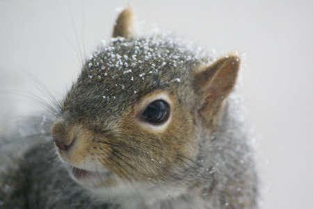 Deze eekhoorn wilde een kijkje op de camera