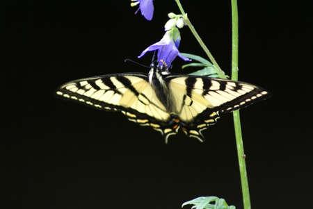 Het voeden van de vlinder